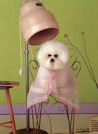 Pet Groomer Image